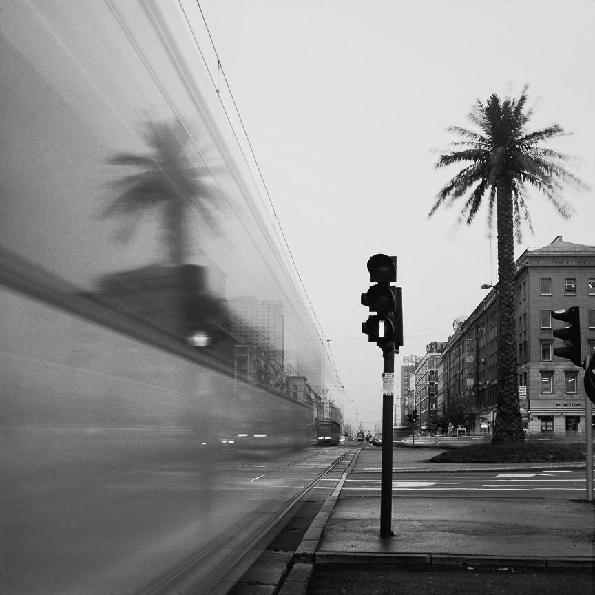 Warszawiacy dla Rajki, Rondo de Gaulle'a, palma na rondzie, Rajkowska