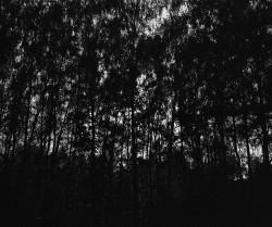 Miriady błysków, las, analog, Mazowiecki Park Krajobrazowy, Polska Mamiya 7II/ Sekor 65/f4, Ilford FP4+ Rodinal 1+50