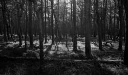 Słowiński Park Narodowy, Smołdziński Las, plener fotograficzny Polskie Stowarzyszenie Fotograficzne EKWIWALENTY, 2015, fotografia wielkoformatowa, fotografia czarno-biała, Polska, Morze Bałtyckie