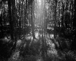 Brzoza Słowiński Park Narodowy, Smołdziński Las, plener fotograficzny 2015