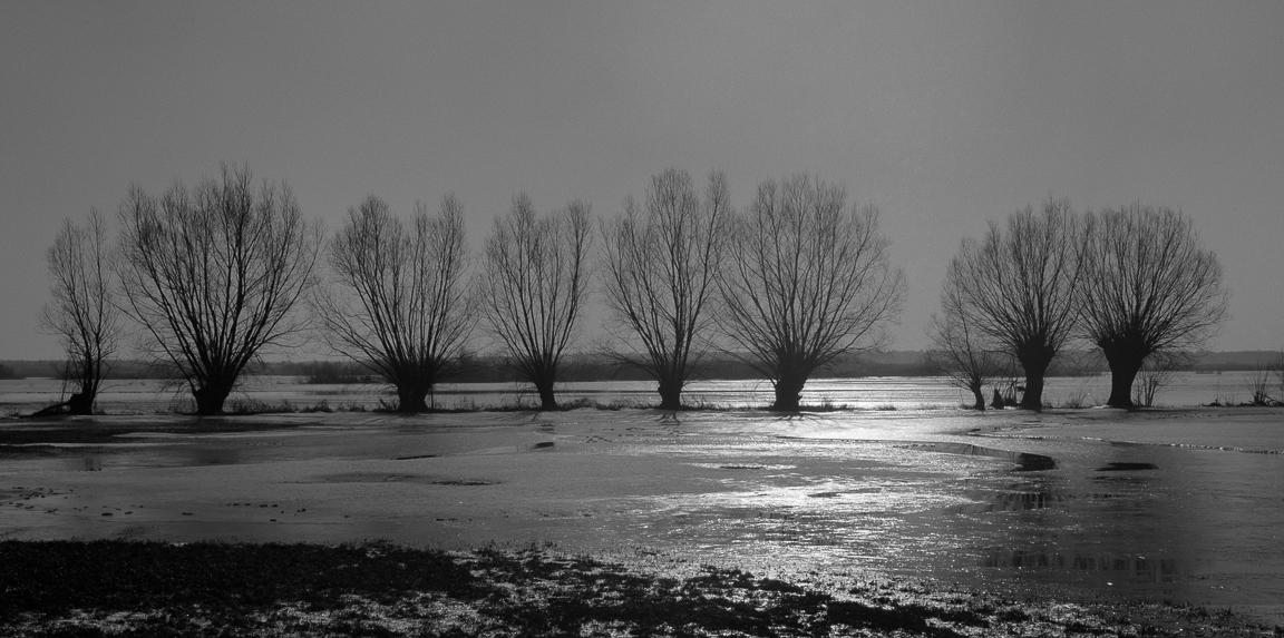 Krajobraz, Zimowa Biebrza
