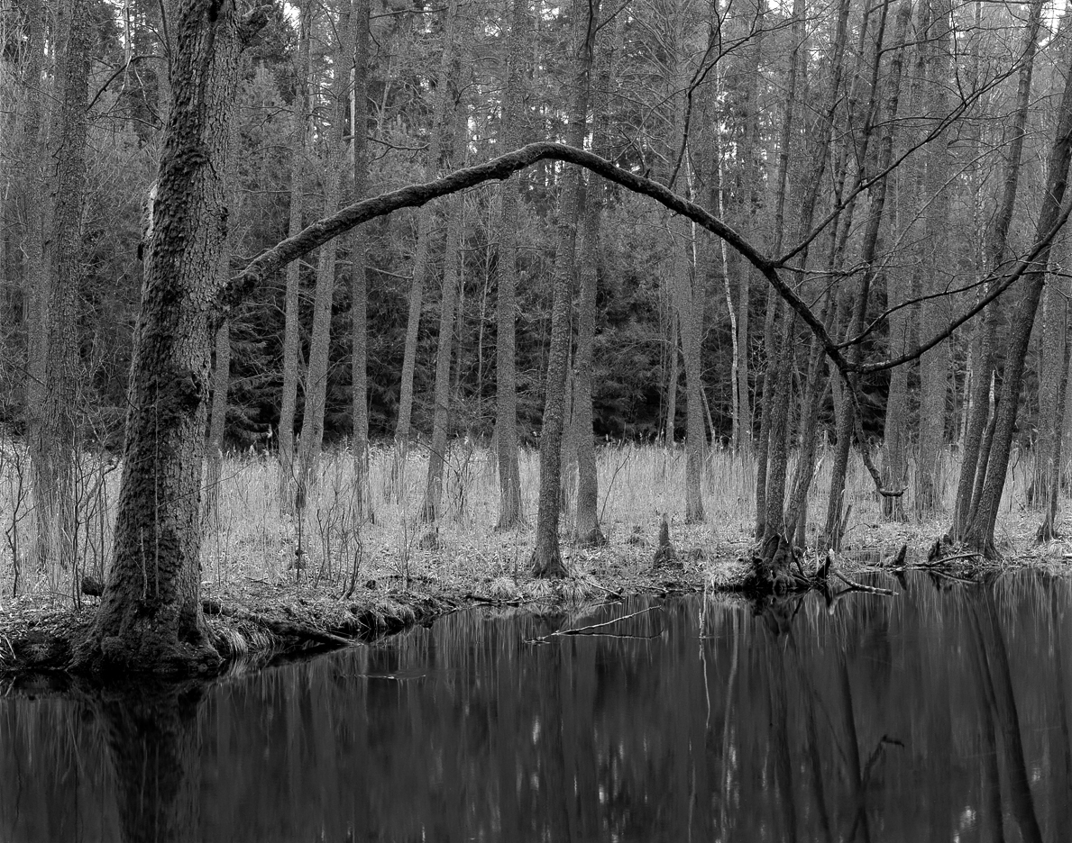 Sawica, Sasek Mały, wiosna, krajobraz naturalny, Krajobraz, Linhof Super Technika V, Nikkor-W 180/f5.6, Ilford FP4+, rodinal