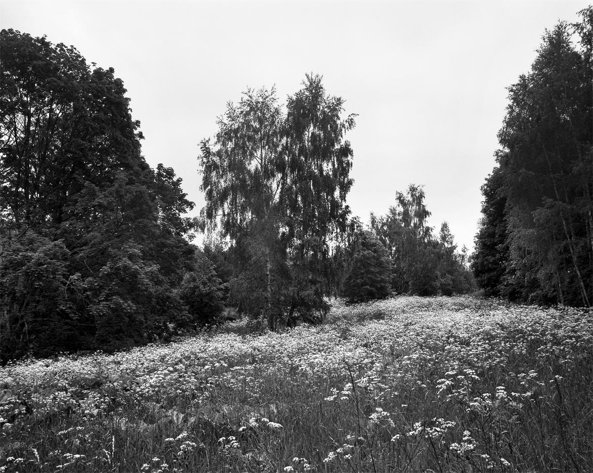 Brzoza w moich fotografiach, Krajobraz, Linhof Super Technika V, Nikkor-W 180/f5.6, Ilford FP4+, Mazury, Łuknajno, lato, fotografia czarno-biała, fotografia tradycyjna, fotografia wielkoformatowa