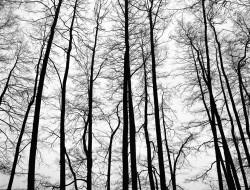 Listopad, drzewa bez liści, silhouette, Jezioro Sarąg, 2013