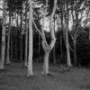 Uważność w fotografowaniu, Poddąbie, 2014, ekspresja, krajobraz, drzewa, las, buk, wybrzeże, Polska, analog, czarno-białe. Mamiya 7II + Sekor 65/f4, Kodak TMax 400@D23