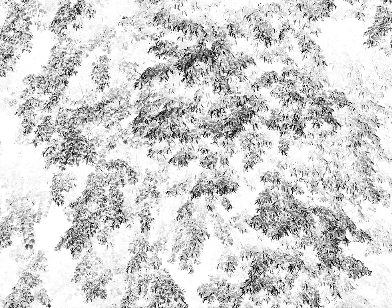 Kadyny, Tolkmicko, Polska, lipa, drzewo, ekspresja, krajobraz