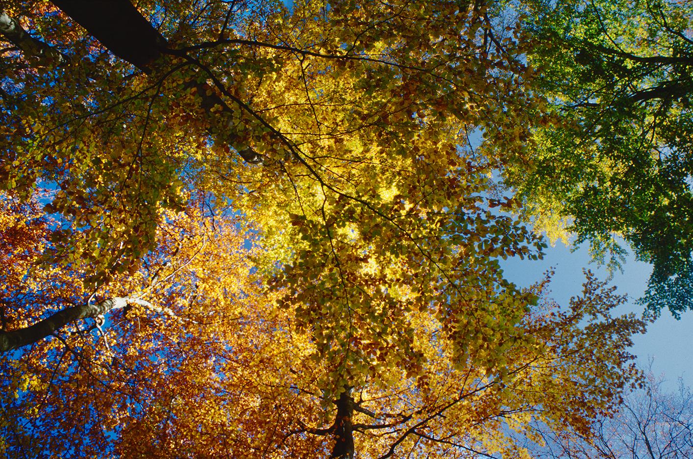 las, buki, Las Bukowy, Szczecin, Jezioro Szmaragdowe, krajobraz, kolorowe, Fujifilm Provia 100F, Praktica MTL-5B, Exakta 35-70/f 3.5-4.5 Fotografia jest prosta!