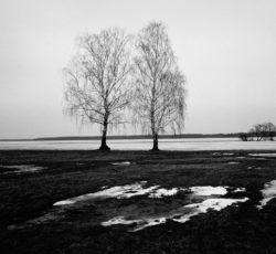 2013, rozlewisko dolnej Biebrzy Mamiya 7II & Sekor N 65/f4, Ilford FP4+, statyw Manfrotto 055CB, Biebrzański Park Narodowy, natura, krajobraz, czarno-białe, fotografia tradycyjna