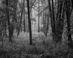 Guzowy Młyn, grąd, las, olchy, drzewa, liście jesień, czarno-biała fotografia, fotografia tradycyjna, Fotografia jest prosta! Kurs 1 na 1, Światowy Dzień Lasu 2021