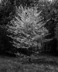 Drzewo, drzewko, las, liściaste, drzewo owocowe, Polska, krajobraz, wiosna, Światowy Dzień Lasu 2021